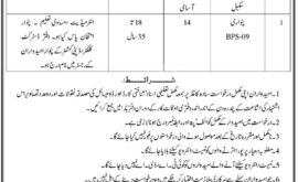 Shangla Jobs For Patwari