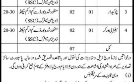 Elementary Secondary Higher Education Department Mirpurkhas Jobs