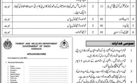 Forest Wildlife Department Sindh Jobs Today Govt Jobs in Sindh Pakistan